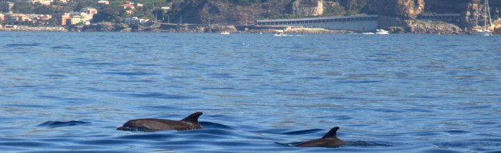 Special and unexpected meeting with the Dolphins